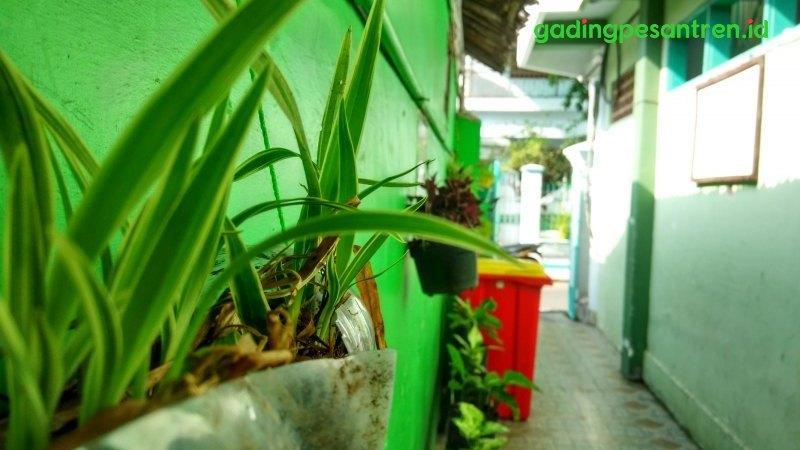 Green Oase Lorong Pondok